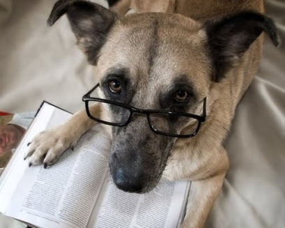 dog-looking-up-from-reading_zps100a8036